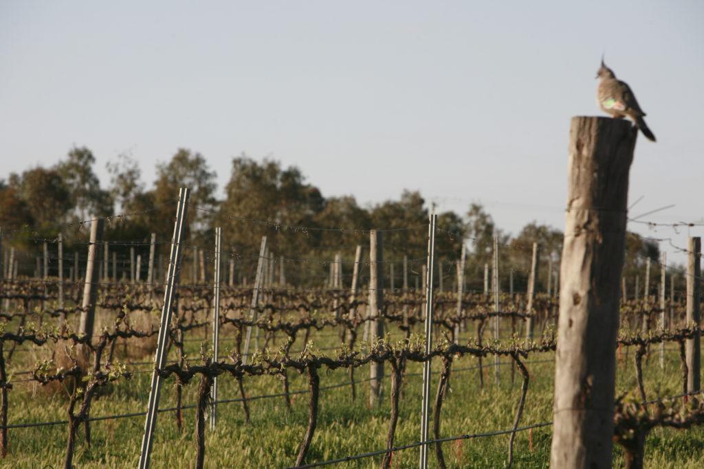 Rozario-Vines-2008-2