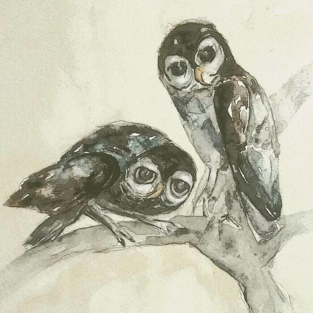 Attentive parent with big chick watercolour aquarels birdsofpray illustration bookofbirds