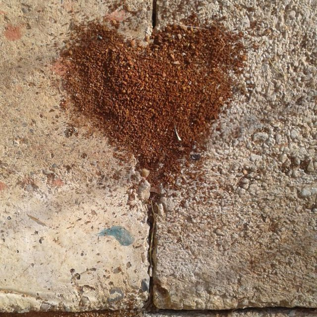 Even the ants can feel it love is love